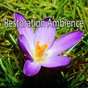 Album Restoration ambience de Guided Meditation