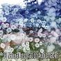 Album 50 Natural Inspiration Audio Tracks de Yoga Namaste