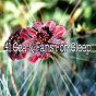 Album 41 sea & fans for sleep de Musica Para Dormir Dream House