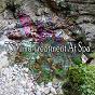 Album 73 mind treatment at spa de Nature Sounds Nature Music
