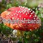 Album 40 storm ambience de Rain Sounds