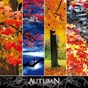 Compilation The seasons: autumn avec Ylric Illians / Frédéric Chauvigné / Laurent Dury / Luc Frigo / Sylvain Poge...